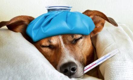 Figyelem! Újfajta megbetegedés fenyegeti a kutyákat!