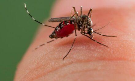 Szúnyoggyérítés a kerületben