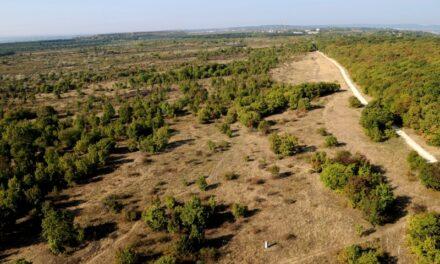 Tétényi-fennsík Természetvédelmi Terület