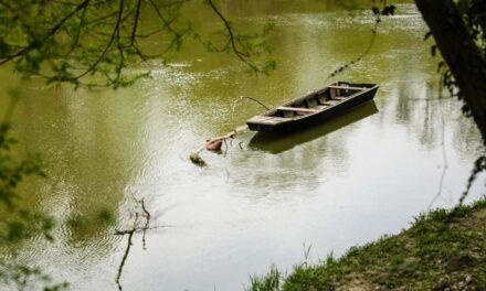 Kerületi összefogás a tiszta Duna-partért
