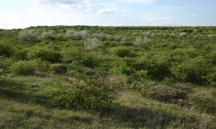 Radó Dezső terv: Kerületi zöldterületek újulnak meg