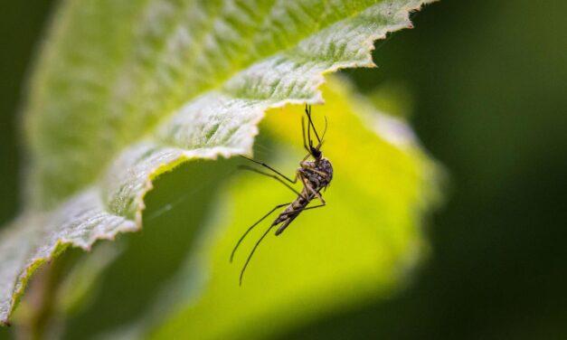 Újabb szúnyoggyérítés a kerületben
